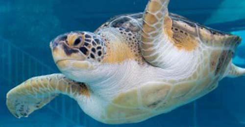 Mote Marine Laboratory & Aquarium Sarasota
